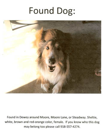Found Sheltie