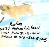 Lost Rockey on Hudson Lake Rd