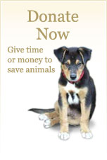 Donate Now: Give time or money to save animals